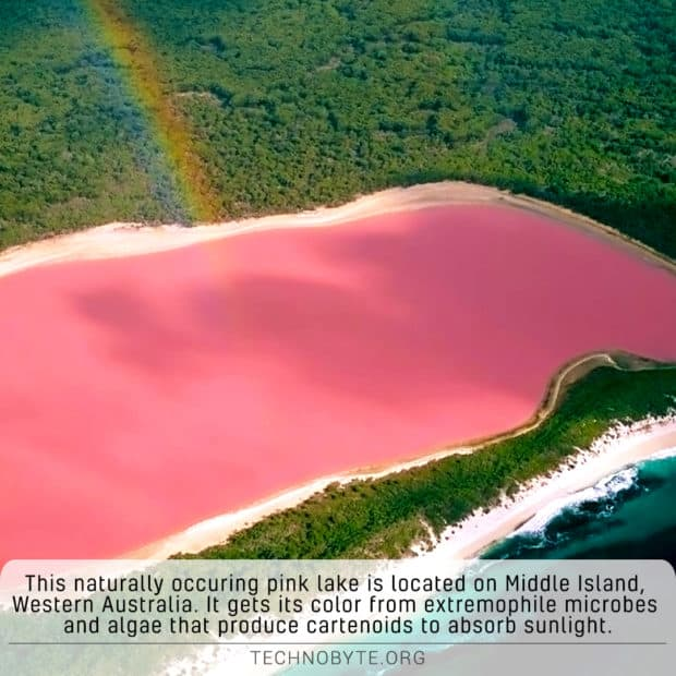wtf fact pink lake hillier australia