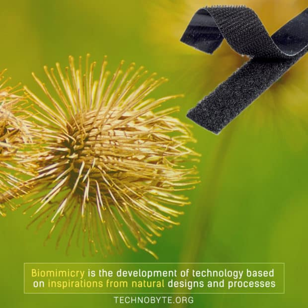 impressive fact that Biomimicry gets inspiration from natural design
